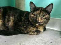 My story I came to the shelter as a very scared kitty,