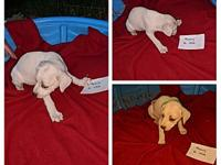 Mercury's story I am one of seven pups. Our mom is a