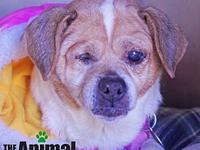 Mercy's story **SPECIAL NEEDS PET** Deaf and partially
