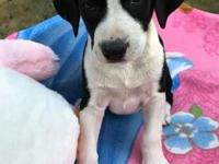 Merida 689671 (Brynn pup)'s story **PUP NOT AT KHS -