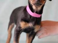 Merida #9840 is an adorable 4-month-old female