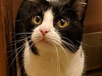 Merle's story Meet Merle! This handsome kitty is 2