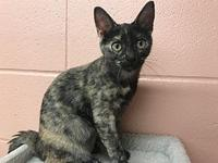 Merleen's story Merleen is a sweet tortoiseshell female