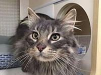 Merlin's story Merlin is a 4 yr old neutered male. He