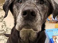 My story Merlin is a very sweet older guy! He came from