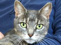 Merlot is a sweet petite young adult female buff tabby