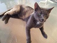 Merlot's story Merlot is a young adult spayed female