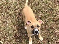 Merlot's story DOB:12/18/18   Merlot is part of