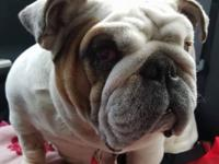 This is Miss Mermaid and yes she is one of the bulldogs