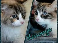 Merrowyn's story Say Meowello to Merrowyn: Merrowyn is