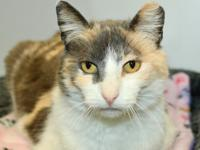 Mew needs a home! This sweet faced girl was returned to