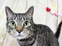 Mew's story Mew is a handsome 6 year old male deep