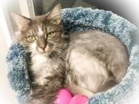 Mew-Mew is a sweet 10 year old boy who is lovable, gets