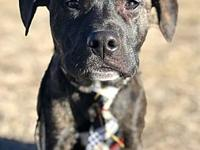 Meyer's story Looking for a foster to adopt home in