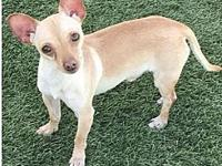Mheetu's story At Wags and Whisker's Pet Rescue: Mheetu