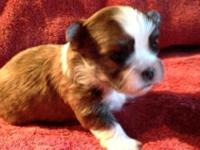 I have 3 male young puppies left. They will certainly