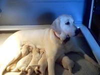 Mia had 6 young puppies 4 four guy 2 ladies however one