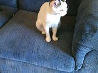 Mia's story Sweet little girl, loves attention and