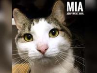 Mia's story Hello there! I'm Mia! I'm on the hunt for