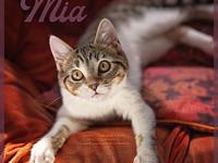 Mia's story Kittens are very social by nature, so if