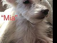 Mia's story Mia came to us via the Hollister group