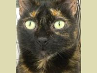 Mia is a 6 year old gorgeous torti girl with pretty