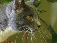 Micah's story I am one stunning cat!! I love to cuddle