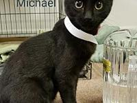 Michael's story   Our adoption fees cover