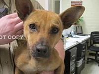 Michael's story Approximately 1 yr old adopted or