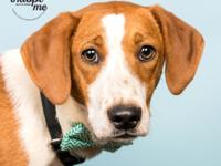 Meet Michaelangelo!  This sweet hound mix is looking