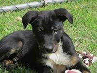 Mick's story Are you looking for a smart, sweet puppy