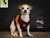 Mickey's story Mickey is a sweet older gentleman who