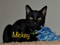 Mickey is a sweet year-old black cat who used to be
