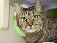 Mickey's story Mickey( A162239) is a 4 year old kitty