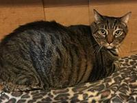 Mickey's story Mickey 7 years old DSH/Neutered Male See