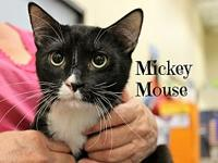 Mickey Mouse's story The adoption fee is $85.00 with an