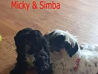 My story Micky and Simba were rescued in Iran and