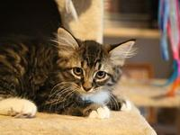Micro's story Meow, My name is Micro, I'm a tabby and