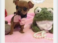 MICRO Teacup Chihuahua (Apple head) Puppies! - $250