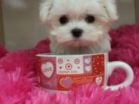 These Maltese are absolutely adorable maltese pups. She
