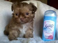 We have 2 very tiny yorkiepoo babies. There were only 2
