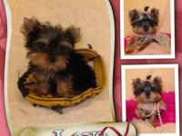 Micro Teeny Tiny Pocketbook T-Cup Yorkies Babies! Call: