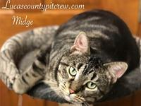 My story Meet Midge! Midge is absolutely gorgeous and