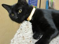 Midnight is ready for her furever home. She is spayed,