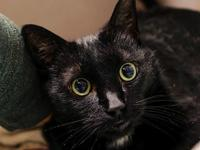 MIDNIGHT's story READY FOR A FOREVER FAMILY Favorite