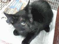 Midnight's story Visit this organization's web site to