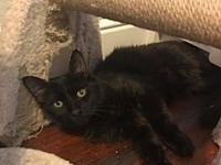Midnight's story Meet Midnight! He is 5 months old and
