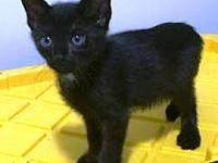 Midnight's story My name is Midnight! I'm a handsome