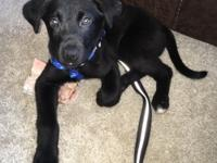 Update: Midnight is doing great in her foster home and