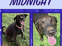Midnight's story Midnight came into rescue when she was